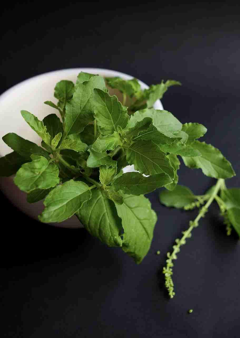 तुलसी के पौधे के क्या फायदे हैं?