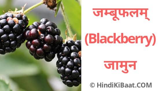 Blackberry in Sanskrit. जामुन का संस्कृत में नाम