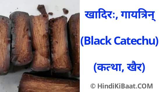 Black Catechu in Sanskrit. कत्था का संस्कृत में नाम