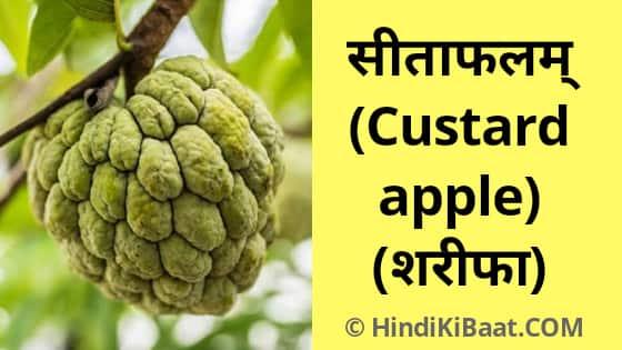 Custard Apple in Sanskrit. शरीफा का संस्कृत में नाम