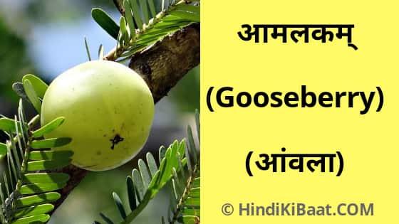 Gooseberry in Sanskrit. आंवल का संस्कृत में नाम