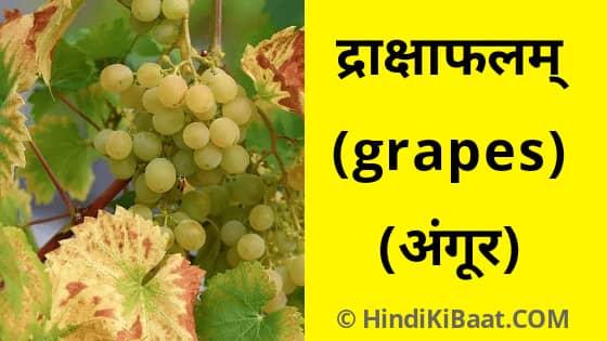 Grapes in Sanskrit. संस्कृत में अंगूर का नाम