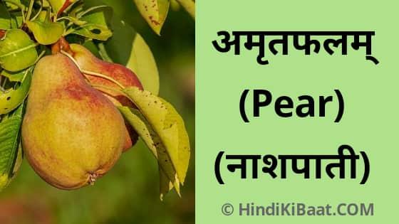Pear in Sanskrit. नाशपाती का संस्कृत में नाम
